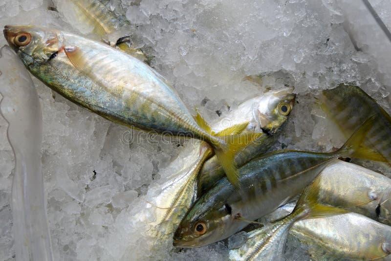 Pescados de rabo amarillo del scad fotografía de archivo