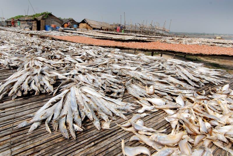 Pescados de sequía foto de archivo