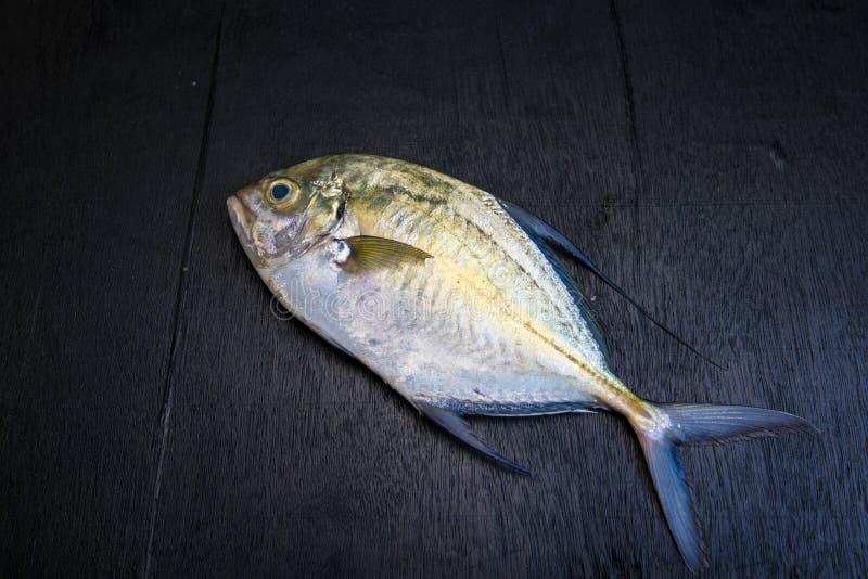 Pescados del Caranx en negro imagen de archivo libre de regalías