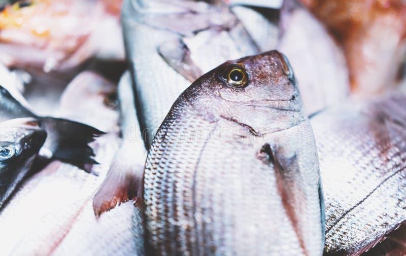 Pescados del dorado del pájaro en el fondo en el mercado, closup de productos del mar frescos, marisco dietético útil del hielo e fotos de archivo