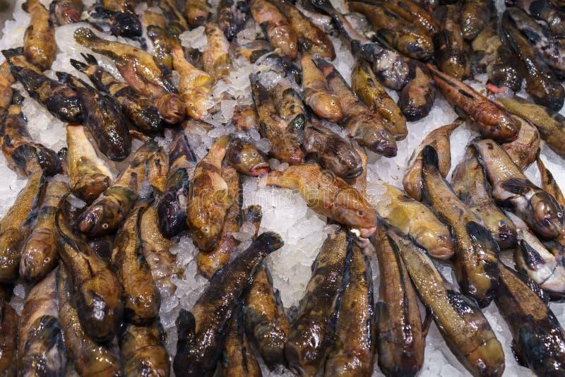 Pescados del gobio del siluro en el hielo en venta foto de archivo libre de regalías
