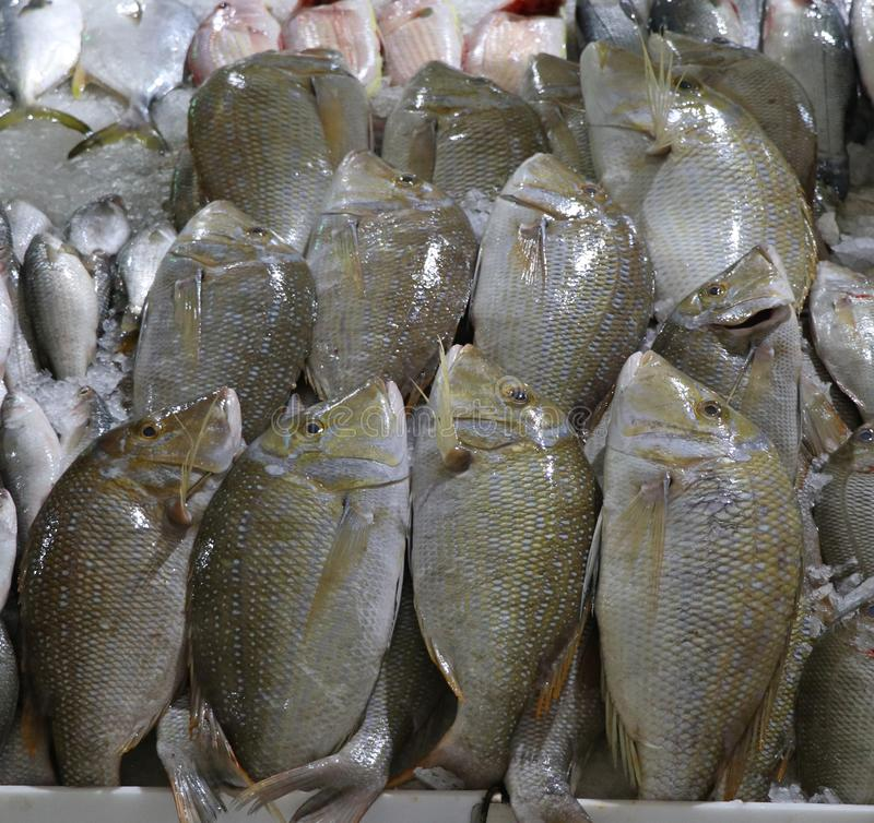 Pescados del jerez en una parada del mercado para la venta fotografía de archivo libre de regalías