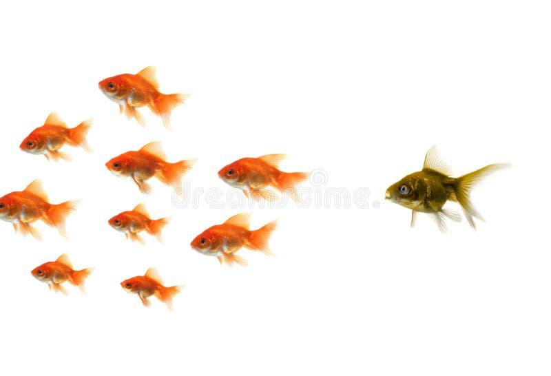 Pescados del oro que se colocan hacia fuera de la muchedumbre foto de archivo