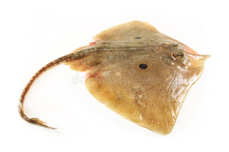 Pescados del patín imagen de archivo