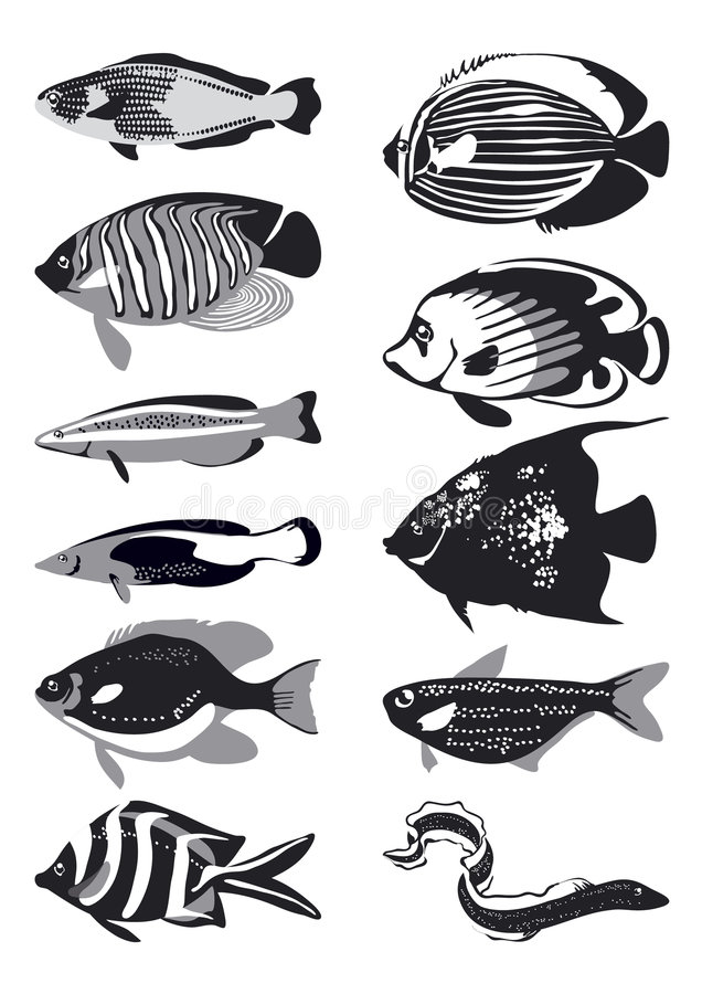 Pescados del vector, blancos y negros ilustración del vector