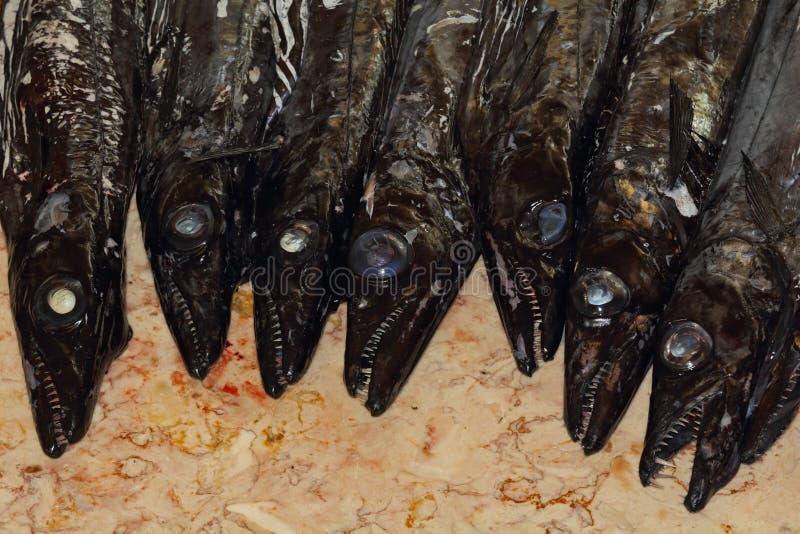 Pescados Dentudos Y Muy Sabrosos Asustadizos Espada Fotos de archivo