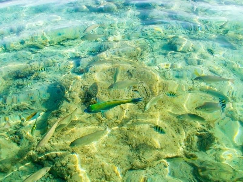 Pescados en agua fotografía de archivo