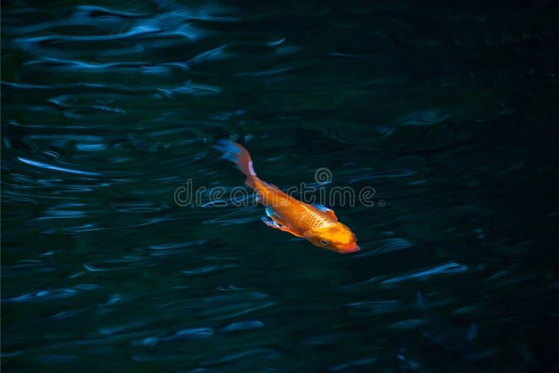 Pescados en agua fotografía de archivo libre de regalías