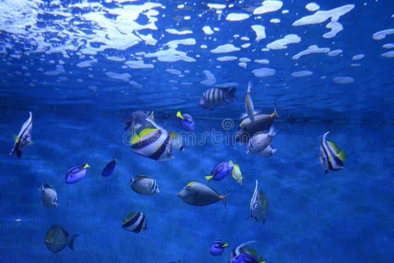 Pescados en aguarium fotografía de archivo libre de regalías