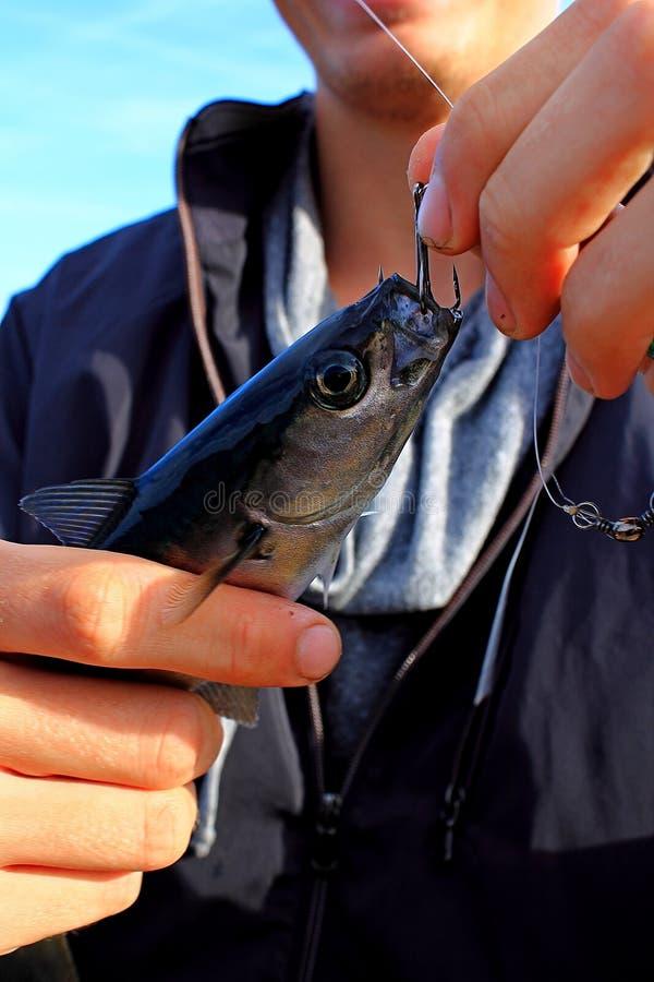 Download Pescados En El Gancho De Leva Imagen de archivo - Imagen de agua, resorte: 41904099