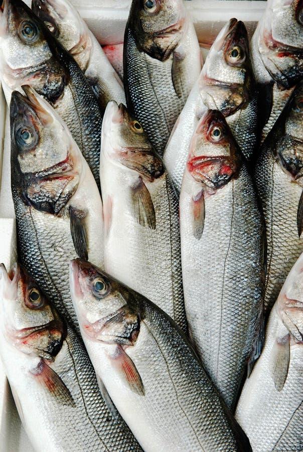 Pescados en el mercado imagen de archivo