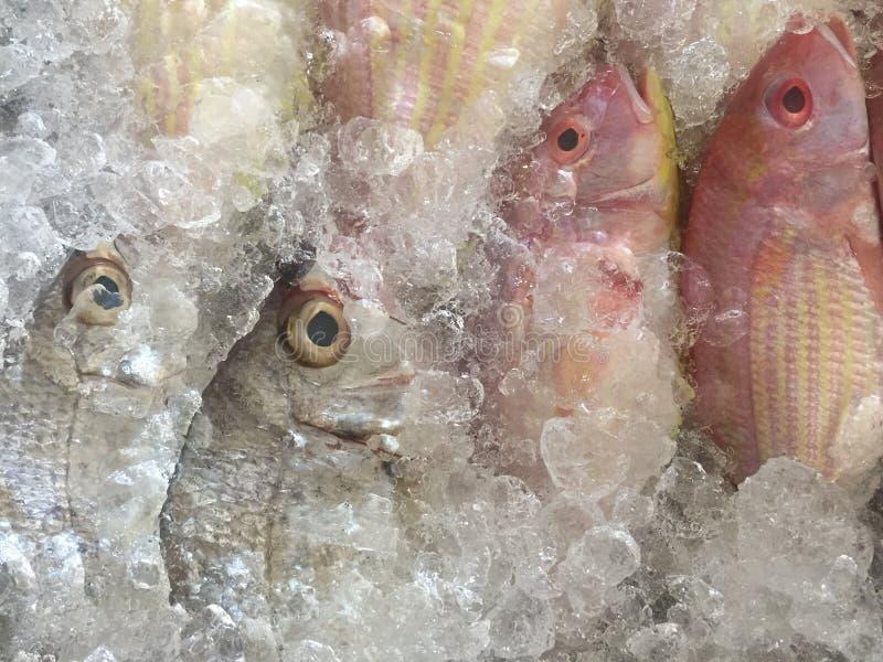 pescados en el mercado fotografía de archivo