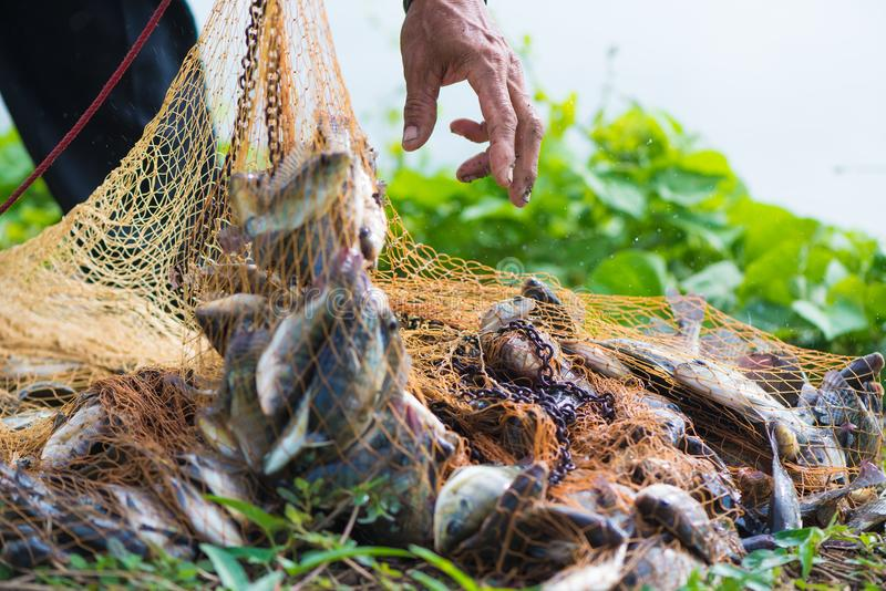 Pescados en red de pesca Animal imagen de archivo libre de regalías