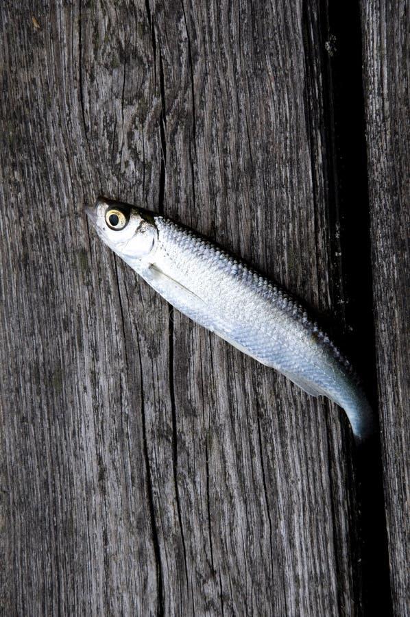 Pescados en una madera imagen de archivo libre de regalías