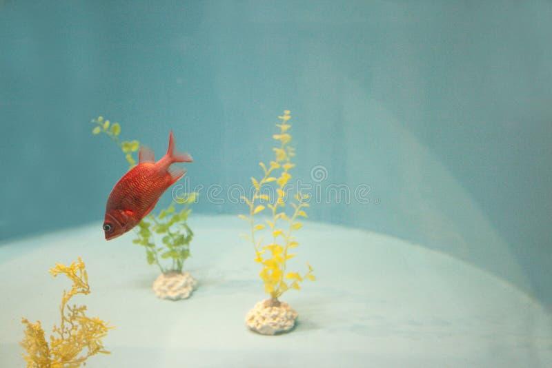 Pescados exóticos en el tanque imagen de archivo libre de regalías