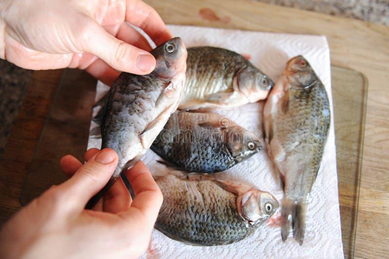 Pescados frescos crudos enteros en tablero cortado Carpa en las manos del primer del cocinero fotos de archivo
