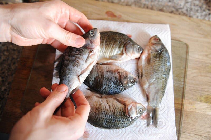 Pescados frescos crudos enteros en tablero cortado Carpa en las manos del primer del cocinero imagen de archivo libre de regalías