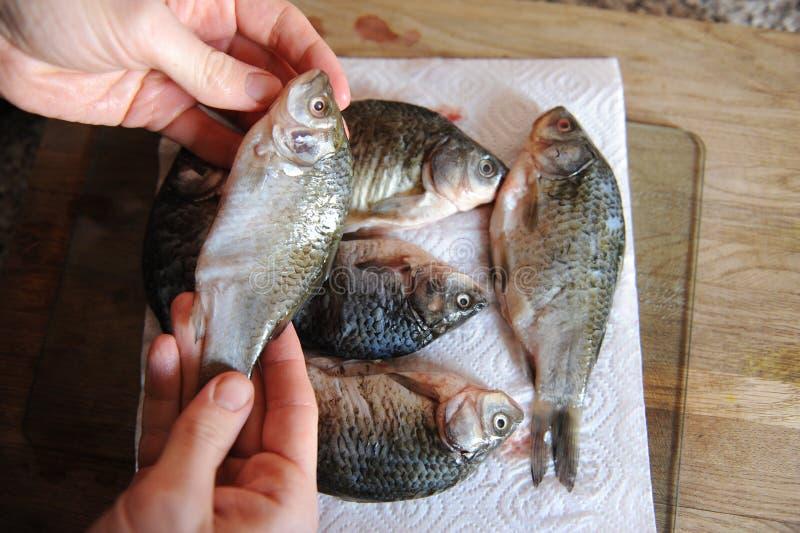 Pescados frescos crudos enteros en tablero cortado Carpa en las manos del primer del cocinero foto de archivo libre de regalías