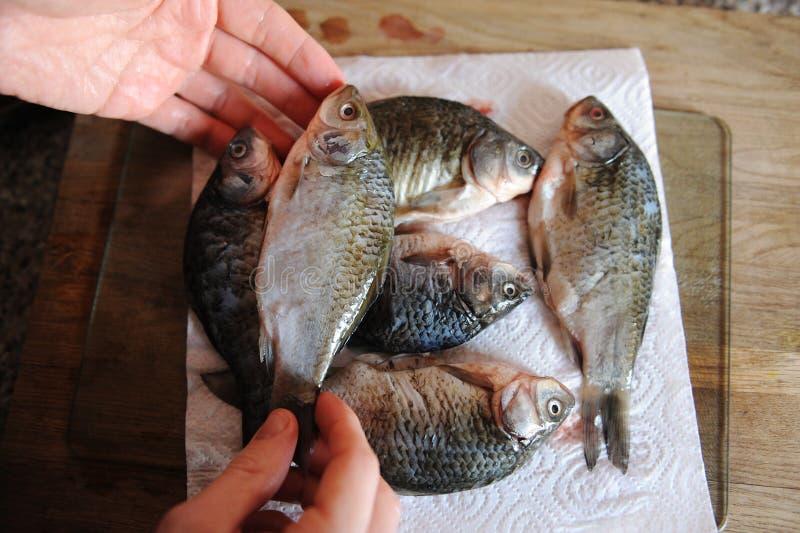 Pescados frescos crudos enteros en tablero cortado Carpa en las manos del primer del cocinero imagenes de archivo