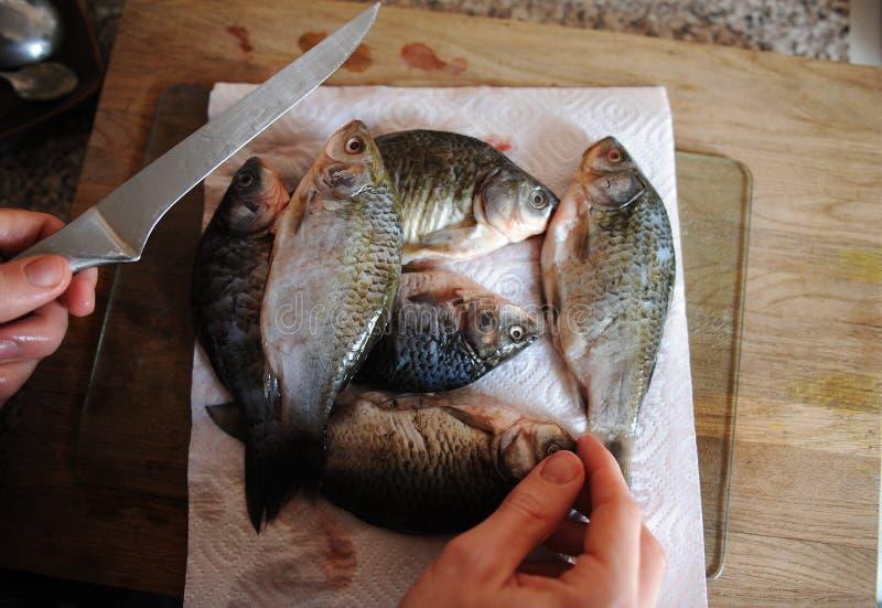 Pescados frescos crudos enteros en tablero cortado Carpa en las manos del primer y del cuchillo del cocinero imágenes de archivo libres de regalías