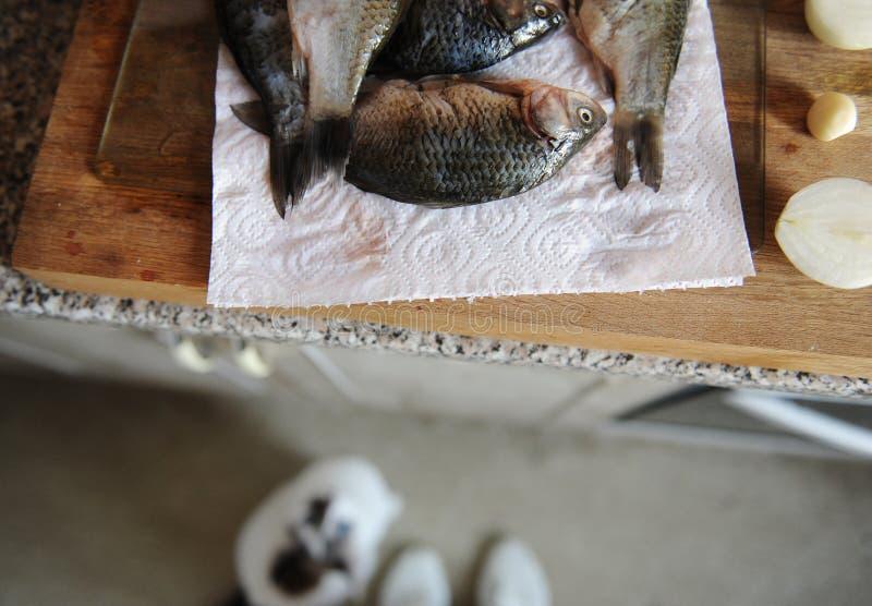 Pescados frescos crudos enteros en tablero cortado Mirada del gato del piso a los pescados en el fondo foto de archivo