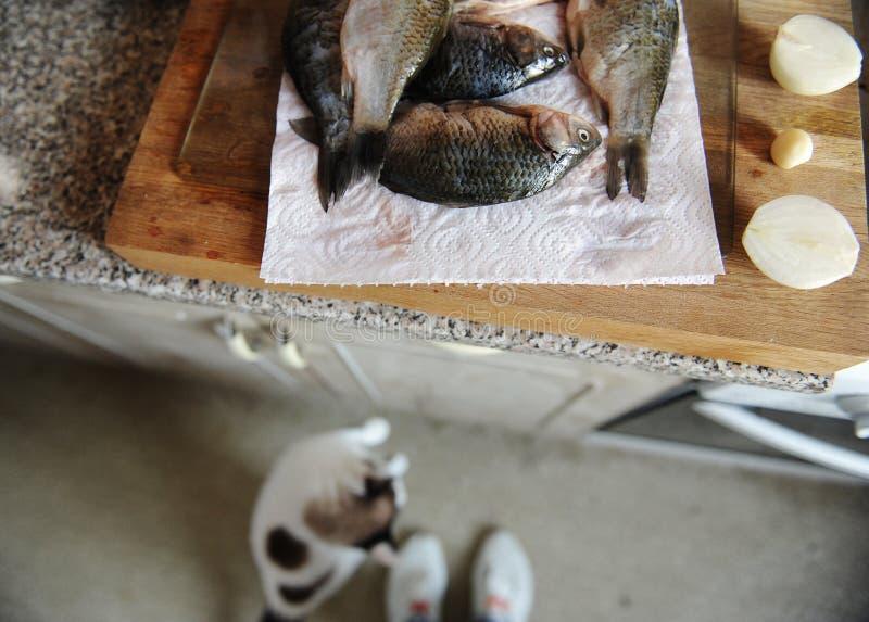 Pescados frescos crudos enteros en tablero cortado Mirada del gato del piso a los pescados en el fondo fotografía de archivo libre de regalías