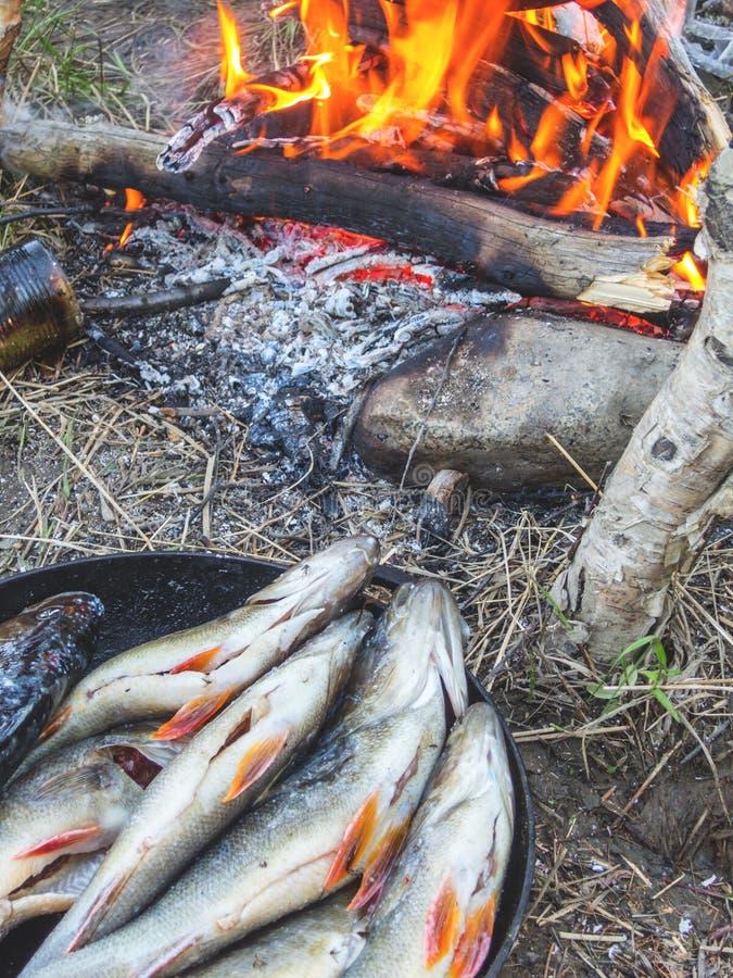 Pescados frescos del río en una cacerola del arrabio cerca del fuego en naturaleza imagen de archivo