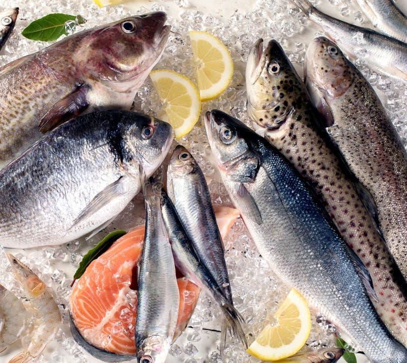 Pescados frescos e ingredientes para cocinar imagenes de archivo