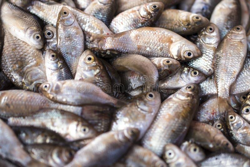 Pescados frescos en el mercado fresco o el supermercado imagen de archivo libre de regalías