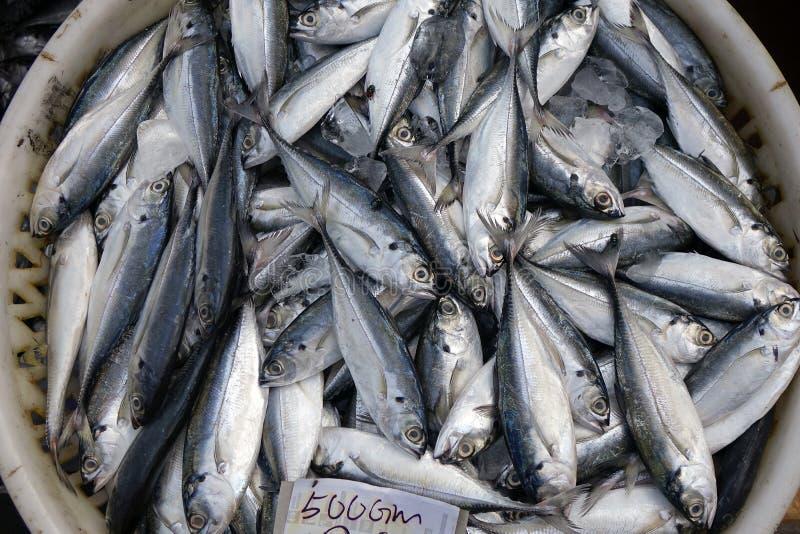 Pescados frescos en el mercado mojado fotografía de archivo