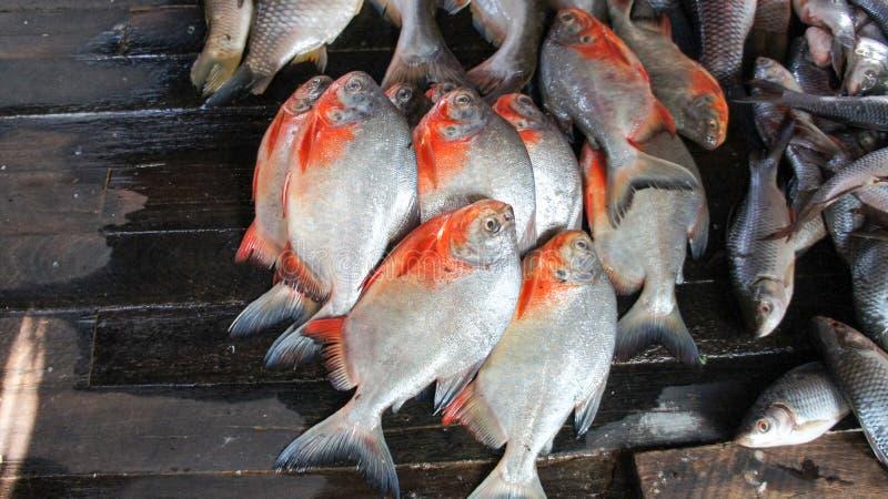 Pescados frescos en un mercado burmese local imagen de archivo libre de regalías