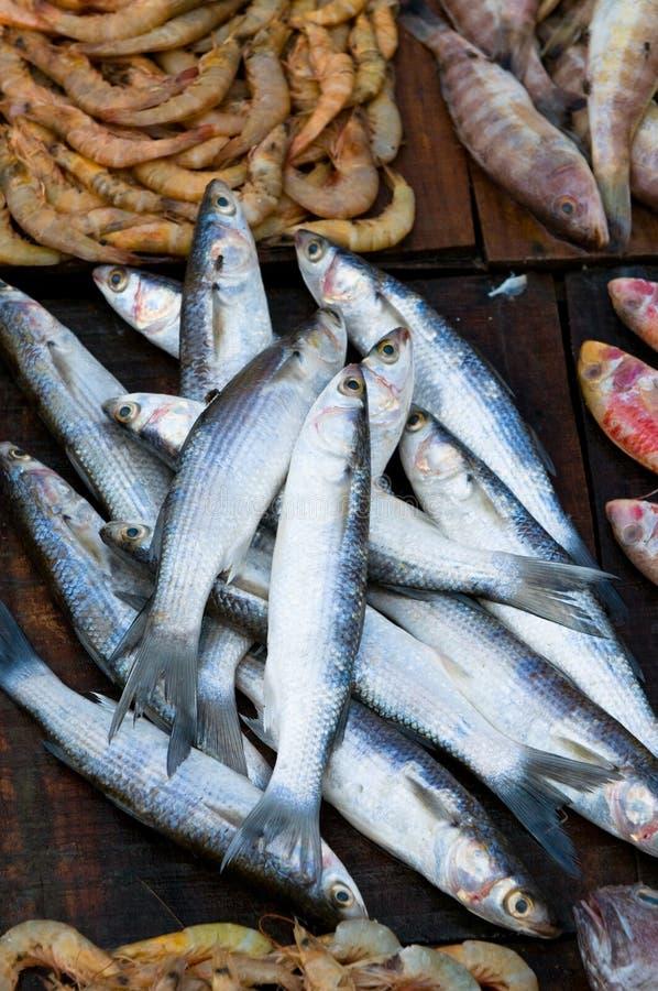 Pescados Frescos En Un Mercado De Pescados Imágenes de archivo libres de regalías