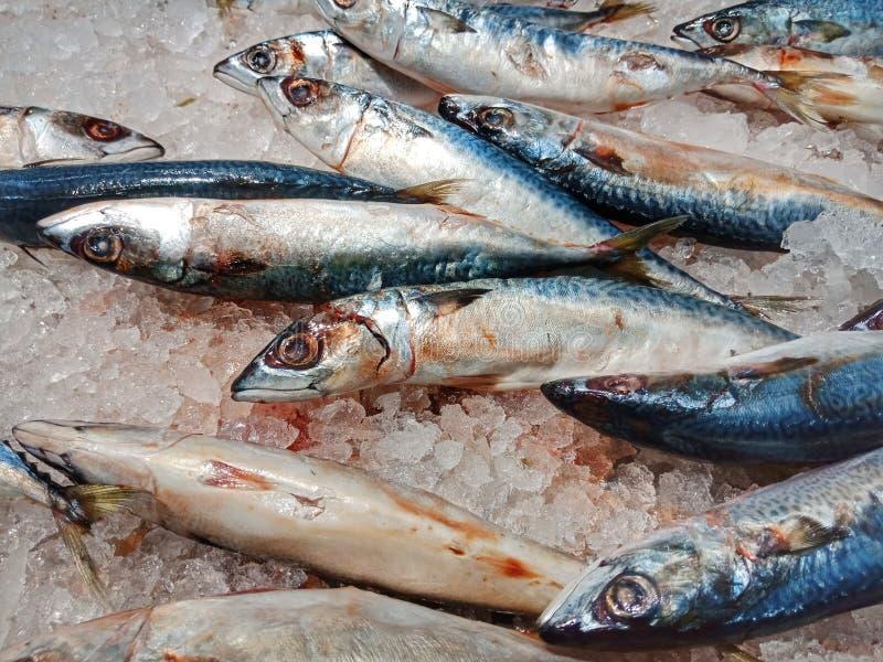 Pescados frescos en venta fotos de archivo
