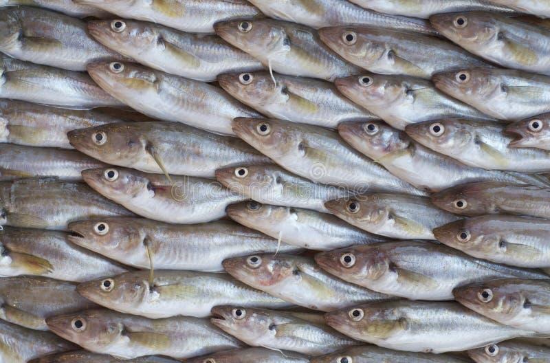 Pescados frescos para la venta en un mercado foto de archivo libre de regalías