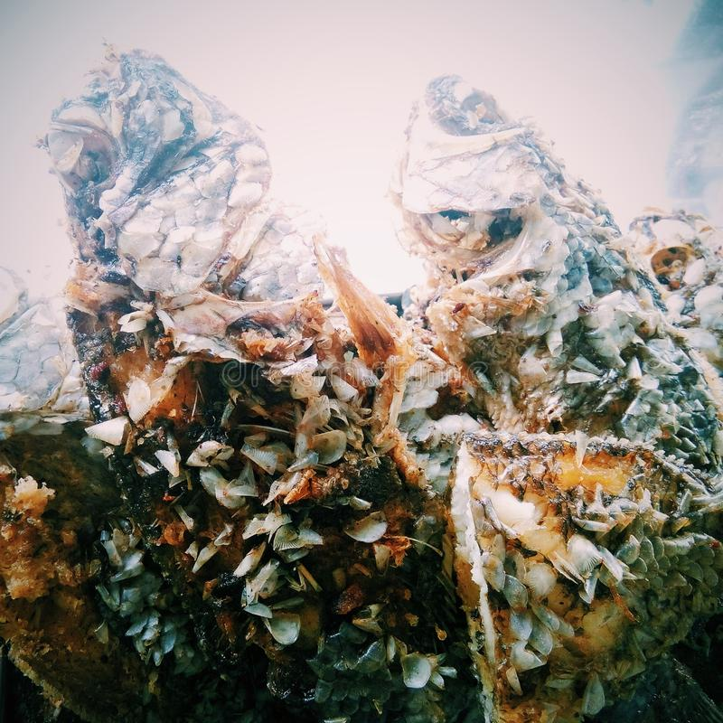 Pescados fritos foto de archivo libre de regalías
