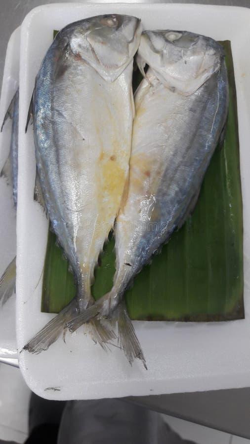 Pescados fritos imagen de archivo