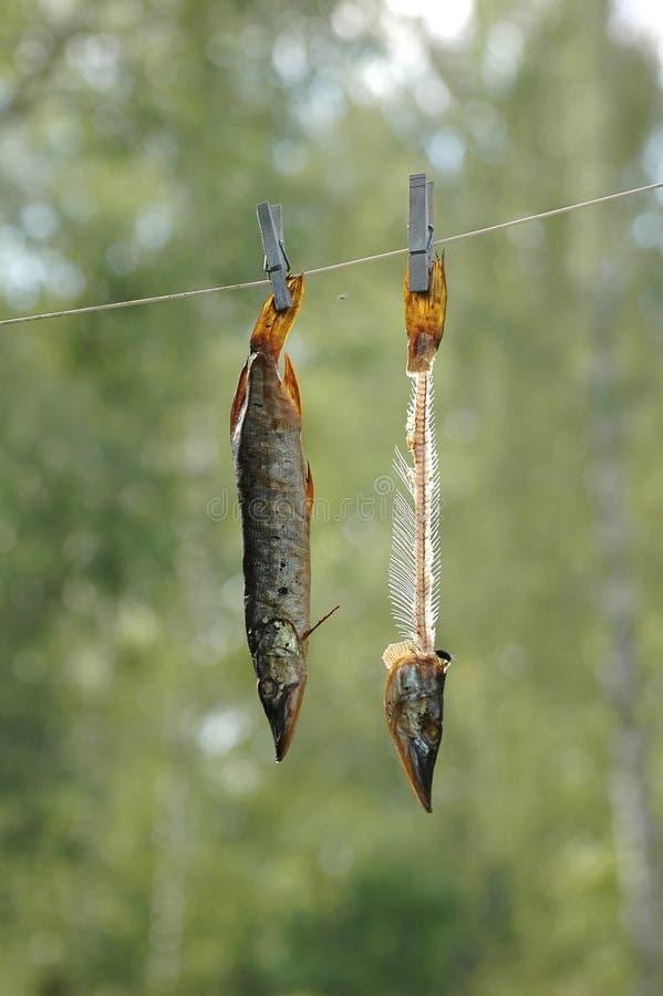 Pescados fumados imagen de archivo libre de regalías
