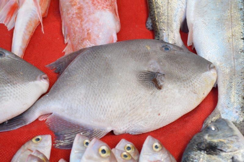 Pescados grandes en una parada en el pavo de Antalya del mercado de pescados foto de archivo libre de regalías