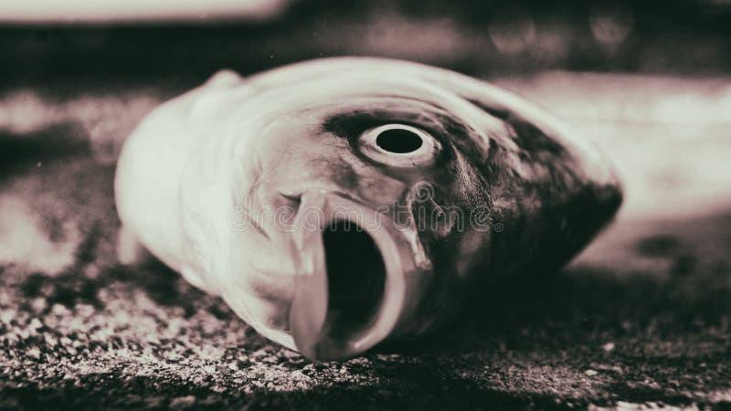 Pescados muertos imagen de archivo