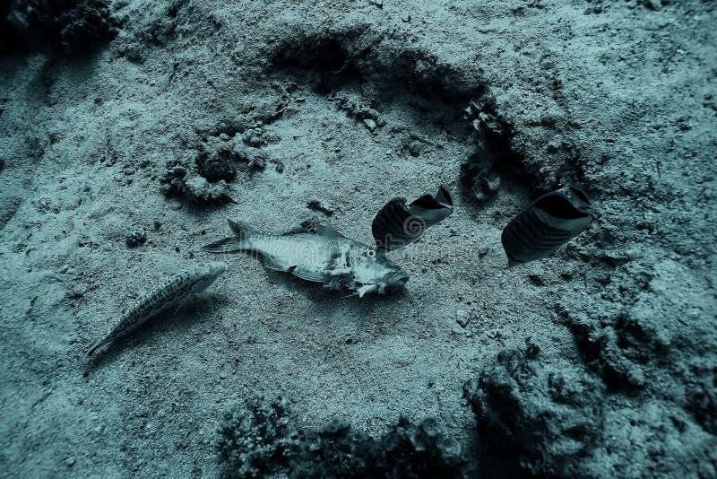 Pescados muertos en el arrecife de coral foto de archivo libre de regalías