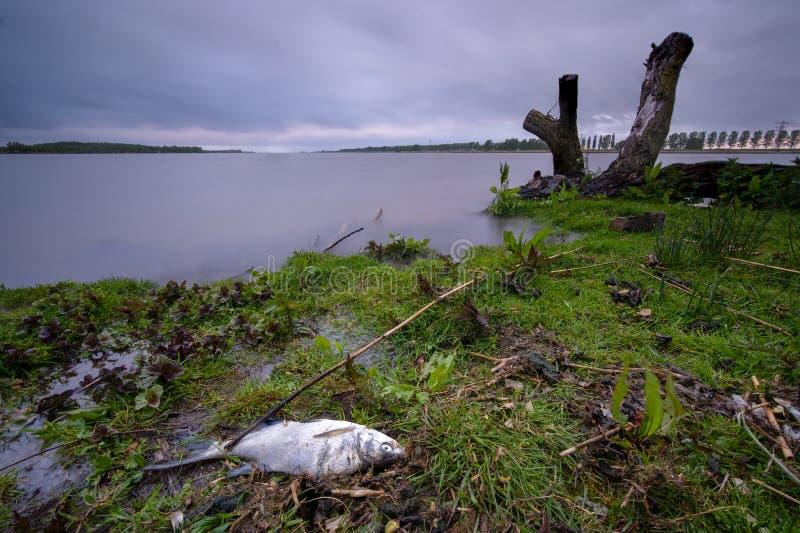 Pescados muertos a lo largo de la costa de un lago grande fotos de archivo libres de regalías