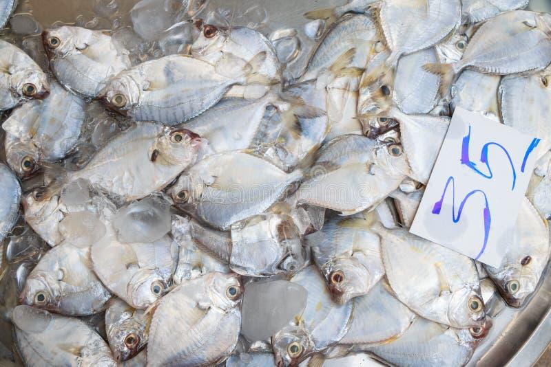 Pescados para la venta fotografía de archivo