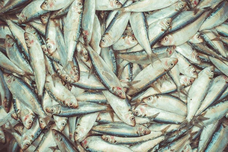 Pescados para la venta imagen de archivo