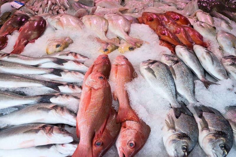 Pescados pelágicos foto de archivo libre de regalías
