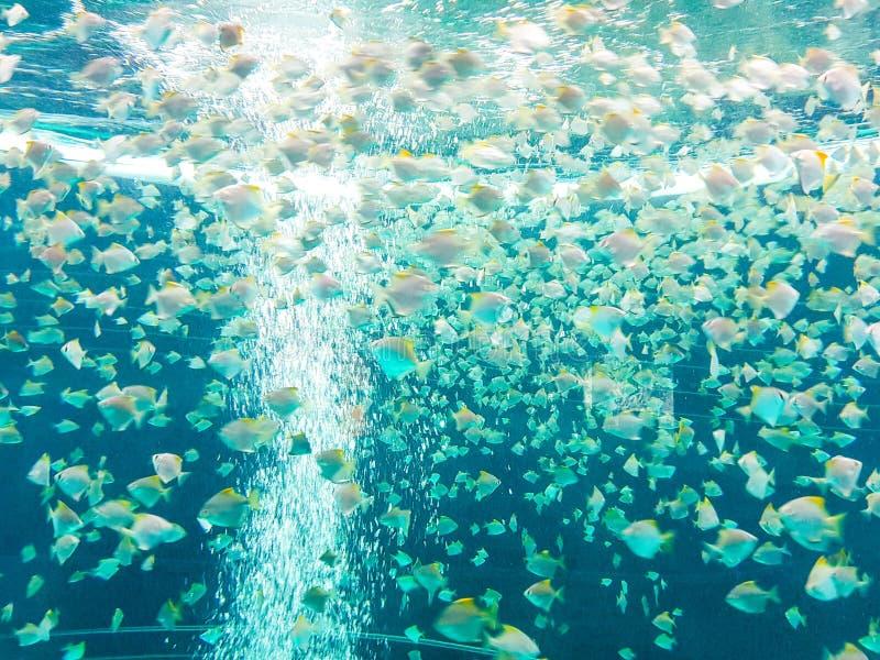 Pescados que nadan en la charca circular y transparente Visión de debajo imagen de archivo