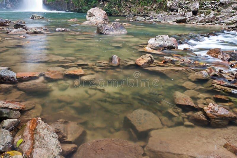 Pescados que nadan en las cascadas. foto de archivo libre de regalías