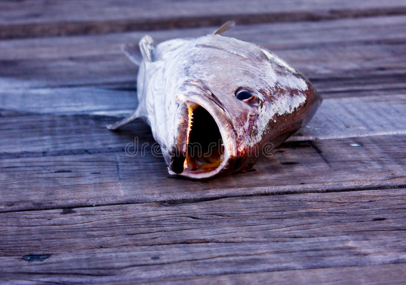 Pescados recién pescados en el embarcadero de madera imagenes de archivo