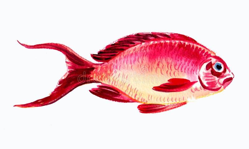 Pescados rojos stock de ilustración