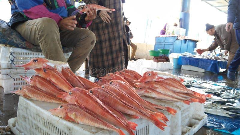 Pescados rojos foto de archivo