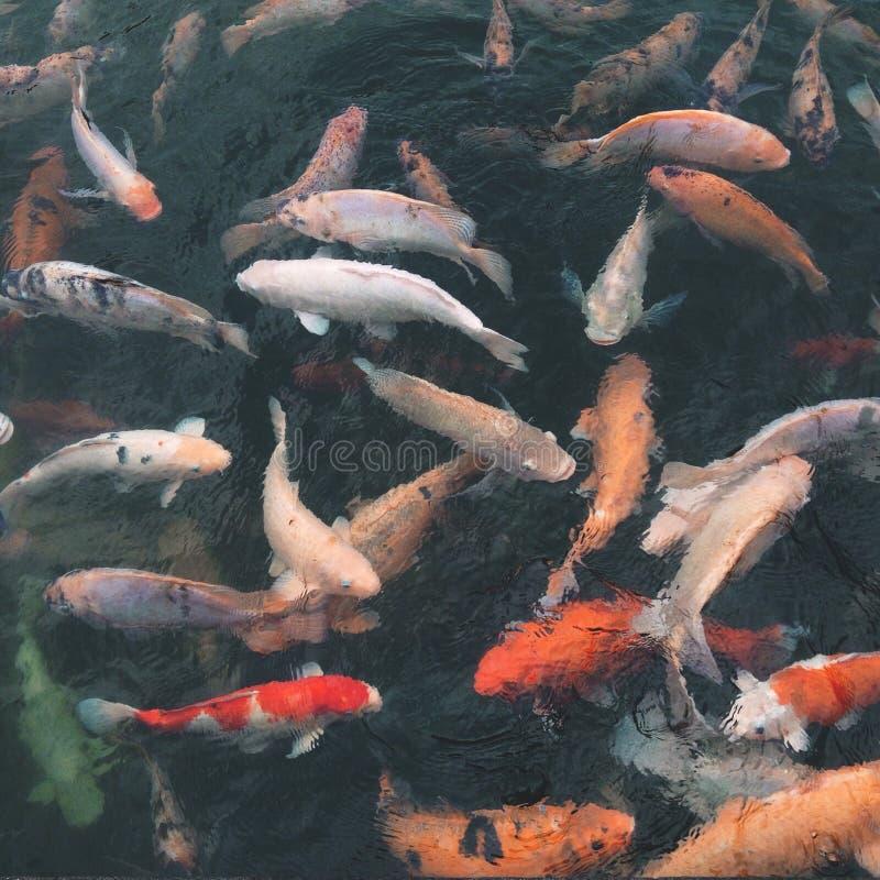 Pescados santos fotografía de archivo libre de regalías